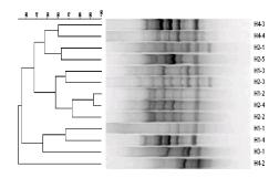 Box_PCR